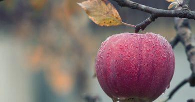 Küresel Gıda Güvenliği İçin Genetik Mühendisliği: Fotosentez ve Biyofortifikasyon