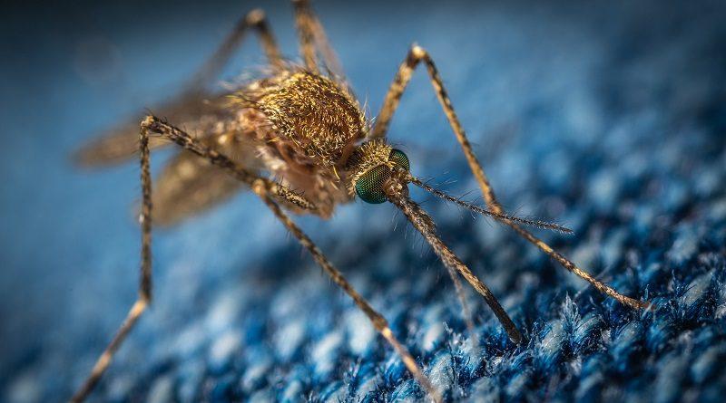 Dang (Şiddetli Eklem ve Adale Ağrıları Veren Ateşli ve Bulaşıcı Hastalık) Virüsünü Püskürtmek İçin Tasarlanmış Sivrisinekler