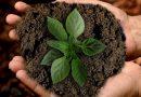 Toprak Mikroorganizmaları